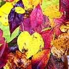 Colorful Autumn Leaf Arrangement by BamaBruce69