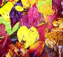 Colorful Autumn Leaf Arrangement by BamaBruce69
