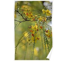 Yellow Weeping Willow Tree Poster