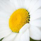 Daisy by TyTheTerrible