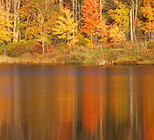 Muskoka Reflections in Fall by Eva Kato