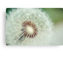 Red Seeded Dandelion Canvas Print