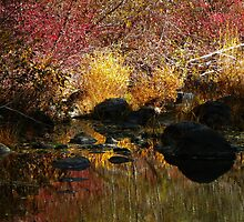 Reflections of Autumn by © Betty E Duncan ~ Blue Mountain Blessings Photography