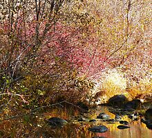 Autumn's Color Pallet by © Betty E Duncan ~ Blue Mountain Blessings Photography