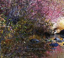 Autumn Falling on Water by © Betty E Duncan ~ Blue Mountain Blessings Photography