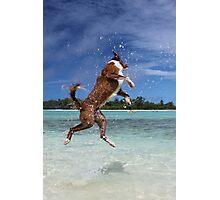 MCC It's a dog's life! Photographic Print