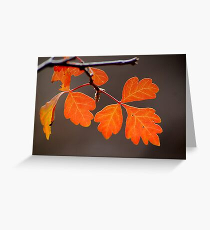 Trimesters Greeting Card