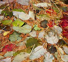 Autumn's Patchwork Quilt by © Betty E Duncan ~ Blue Mountain Blessings Photography