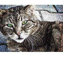 a cat Photographic Print