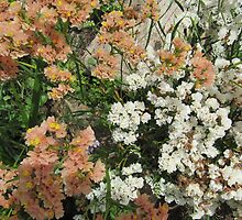 Different shades of 'Statice'_limonium_  in the garden bed, Arilka. S.A. by Rita Blom