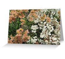 Different shades of 'Statice'_limonium_  in the garden bed, Arilka. S.A. Greeting Card