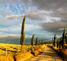 Country road, Tuscany by Tamara Travers