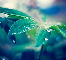 Waterdrops by netza