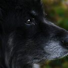 Wisdom of an older dog... by Laura-Lise Wong