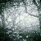 Winter Wood by Sybille Sterk