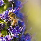 Bee - utiful! by Amy Dee