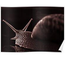 snail monochrome Poster