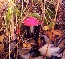 Faerie Todstool by angellifepics