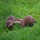 Otter Pair by lezvee
