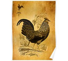 Thanksgiving Rooster Poster