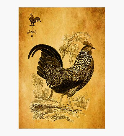 Thanksgiving Rooster Photographic Print