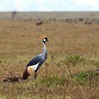 Grey Crowned Crane on the Masai Mara by Sue Robinson