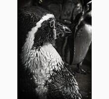 Humboldt Penguin, Black and White Unisex T-Shirt