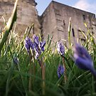 Bluebells around Cliffords Tower York by Sarah Tweedie