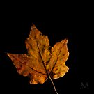Autumn Light 3 by M. J. Cuthbertson