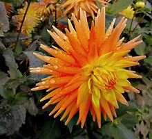 Orange spikes - dahlia by bubblehex08