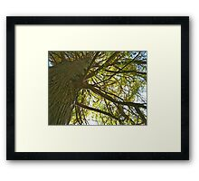 Fall 2012 Collection 7 Framed Print