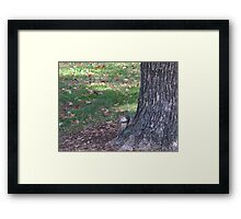 Fall 2012 Collection 13 Framed Print