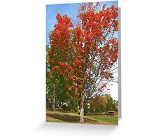 Fall 2012 Collection 21 Greeting Card