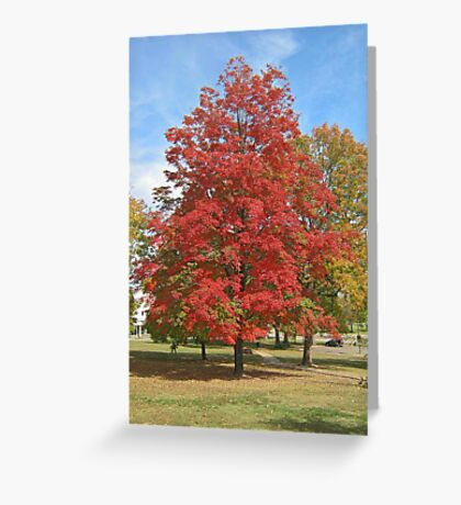 Fall 2012 Collection 28 Greeting Card