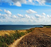 Walking on the late summer cliff by jchanders