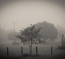 Park in the Fog by PCB1981