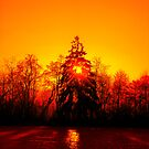 Fire in the Trees by globeboater