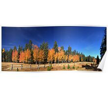 Buck And Rail Fence Running Through Fall Aspens - Panorama Poster