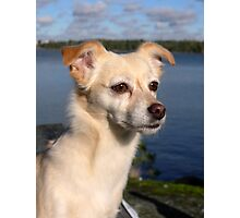 Princess - The most beautiful dog in the world Photographic Print