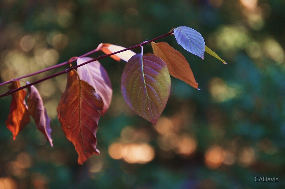Colors of Fall by CADavis