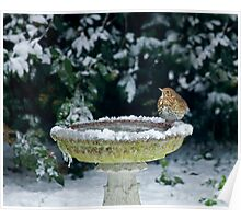 Song Thrush in snow Poster