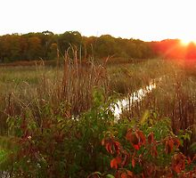 Sunrise at Beaver Meadows by Jason  King