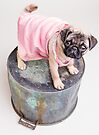 Pug Puppy in pink sun dress by Edward Fielding