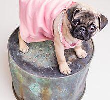 Pug Puppy in pink sun dress by Edward Fielding