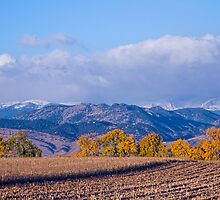 Colorado Autumn Morning Scenic View by Bo Insogna