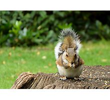Nibbles Photographic Print