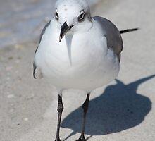 Gull Leader by Bob Hardy