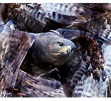 Designs Inspired By Nature: Buzzard Photographic Print