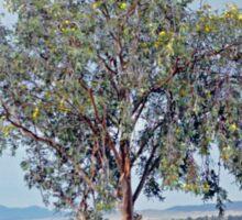 Lone Tree, Hawker Sticker