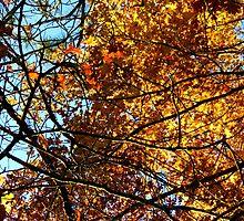 Oxford, MI | Autumn 7 by RJtheCunning